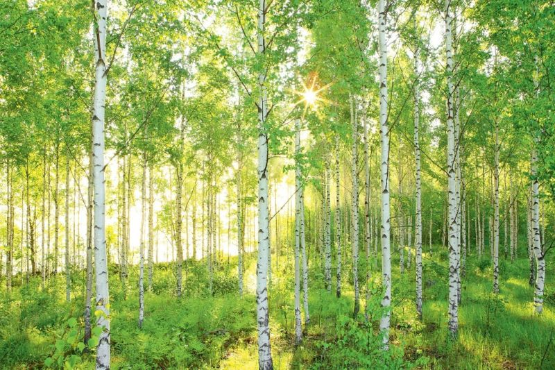 Five aspen homes for sale sold for over ten million for Birch tree forest wall mural